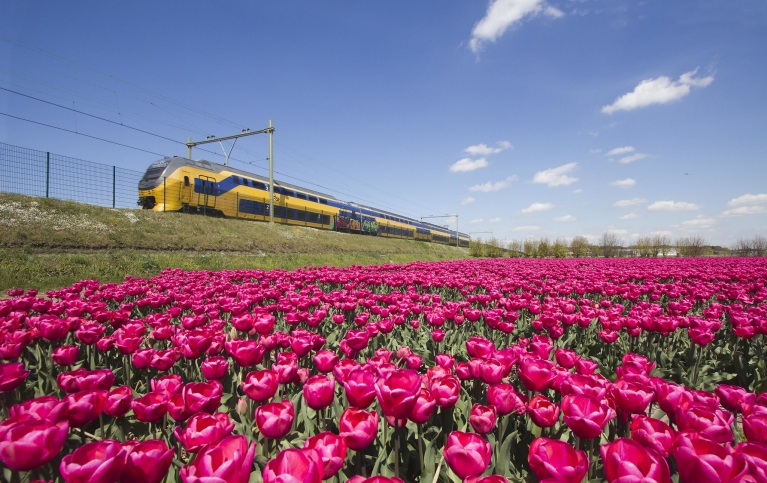 Train in the Netherlands